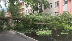 В Брянске возле строительного техникума на дорогу упало дерево