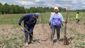 В Клетнянском районе на 60 гектарах заложили яблоневый сад