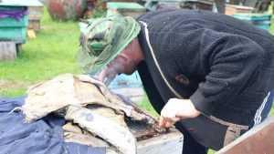 «Это безумие»: брянских пчеловодов стали уничтожать