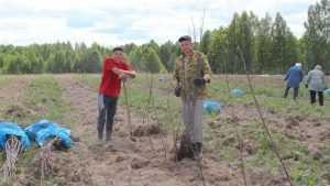 В Клетнянском районе посадили «сербский» яблоневый сад