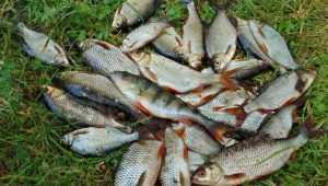 Брянца отправили в колонию на 14 лет за убийство рыбака из-за улова