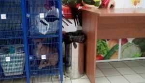 Брянцы показали фото запертой в камере хранения супермаркета собаки