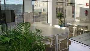 Преимущества озеленения офисов и территорий