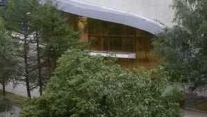 В Брянске коммунальщикам указали на рухнувшее возле цирка дерево
