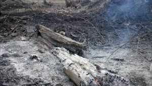 «Авиалесоохрана» заявила об опасности пожаров в Брянской области