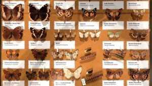 Брянские таможенники забрали у украинца 700 засушенных жуков и бабочек
