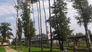 Властям Брянска указали на опасные деревья в бежицком сквере