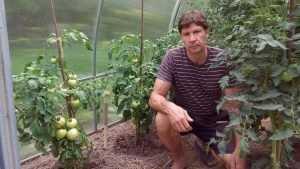 Самый трудолюбивый брянский дачник раскрыл секрет вкусных помидоров