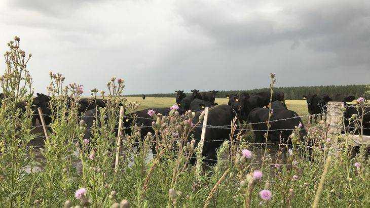 Мясная отрасль стала ведущей в Брянской области
