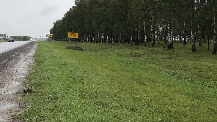 Водителя из Белоруссии удивила чистота обочин брянских дорог