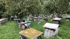 В Брянской области у 25 пасечников погибли пчелы