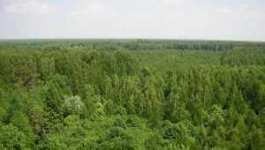 Брянщина заняла 9 место в стране по эффективности использования лесов