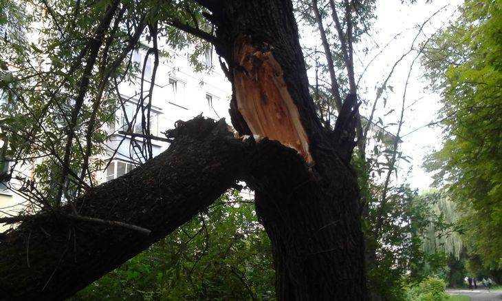 Ураганный ветер в Брянской области повалил 23 дерева