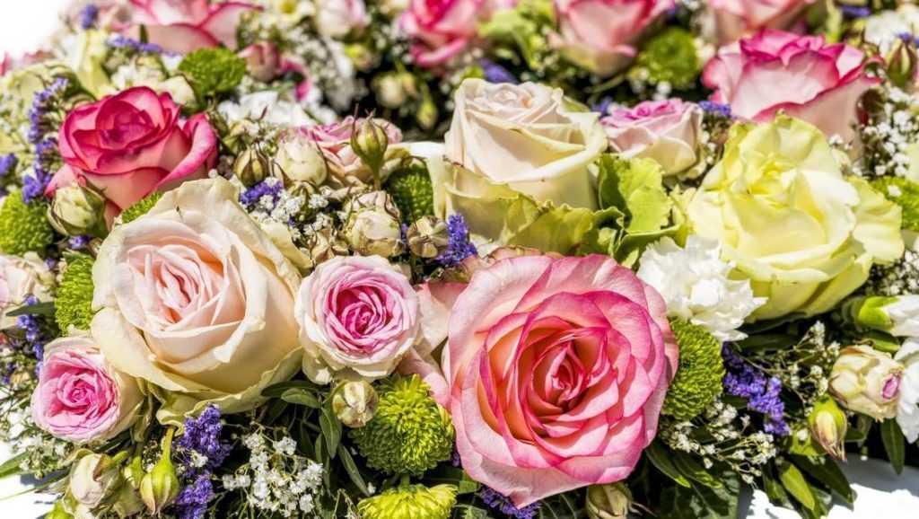 Где купить великолепные розы оптом