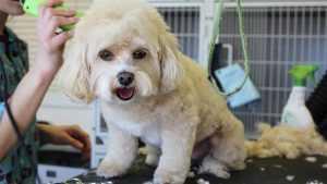 Где стильно подстричь собаку в Санкт-Петербурге