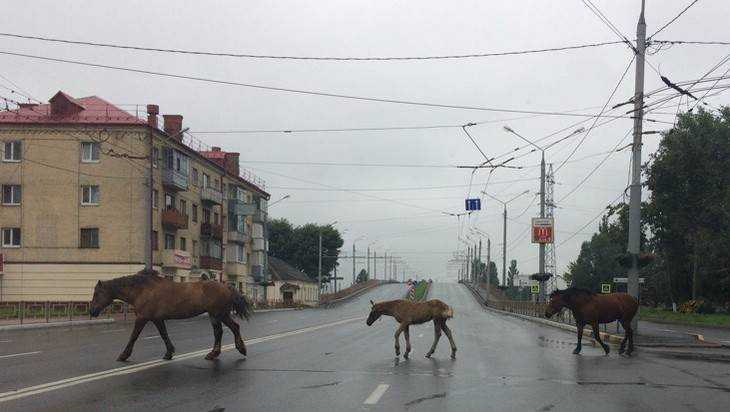 В Брянске цыганских лошадей не переходе сравнили с «Битлз»