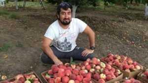 Торговцы попросили наладить доставку кавказских фруктов в Брянск