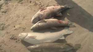 Жители Брянской области обвинили компанию в массовой гибели рыбы