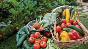 В брянской библиотеке дачники покажут дары своих садов и огородов