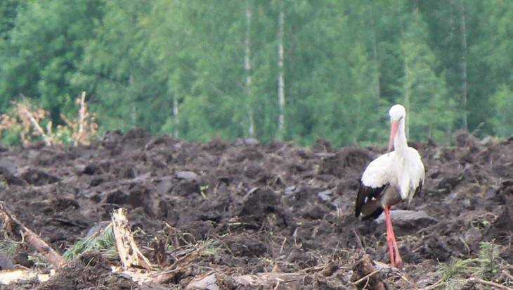 В Брянской области поселились птицы счастья