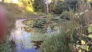 В Брянске ОНФ взял под защиту хозяев затопленных сточными водами дач