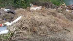 В Белых Берегах брянцев напугали захватившие свалку огромные крысы