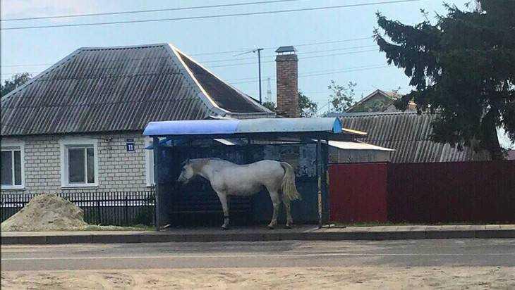 Жителей Брянска рассмешила лошадь, ждавшая маршрутку до Ковшовки