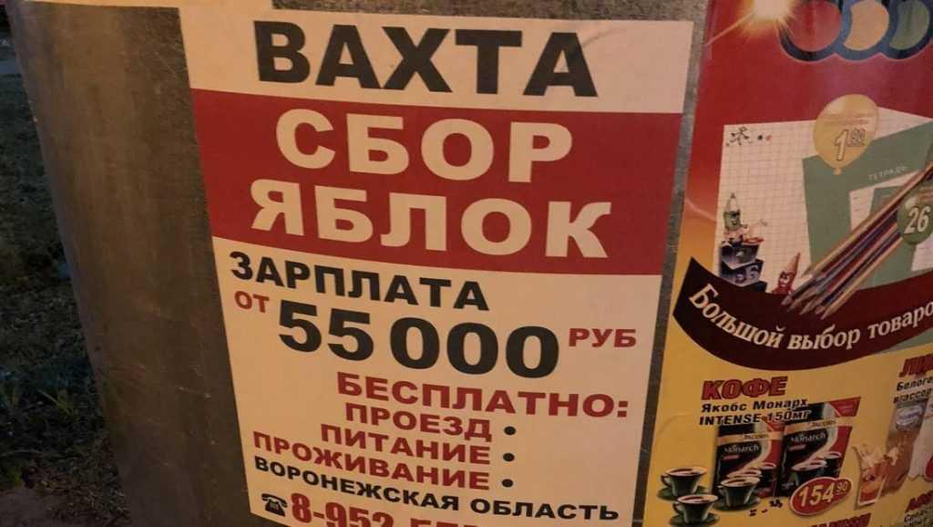 Брянцам предложили 55 тысяч рублей за сбор яблок