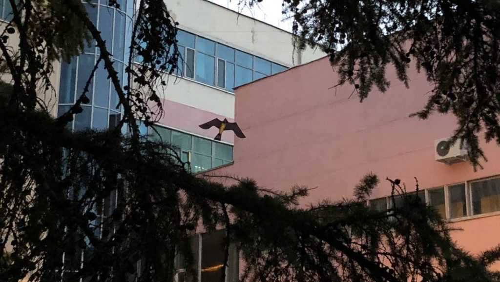 Брянцев напугала огромная птица возле Дома быта