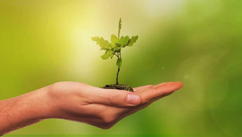 Брянским учителям на 1 сентября предложили дарить деревья