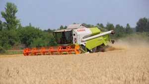 На полях Брянской области убрали 80 процентов зерновых