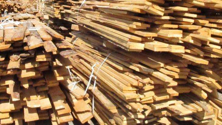 Брянский лес стал жертвой дикой торговли