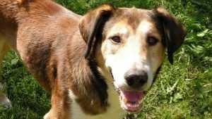 В Брянске опубликовали жуткое видео гибели отравленной собаки