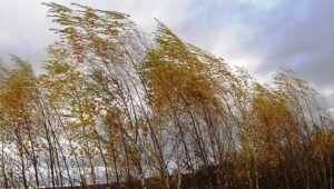 В Брянской области МЧС объявило предупреждение из-за дождя и сильного ветра