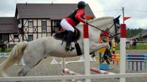 Брянские конники соревновались в конкуре