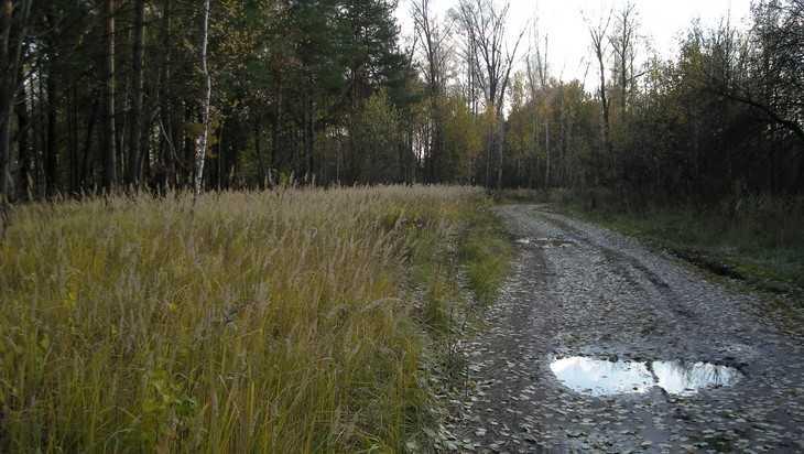 Под Брянском начали искать заблудившуюся в лесу 78-летнюю пенсионерку