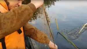 Появилось видео борьбы с браконьерами на Белобережском водоеме