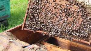 В Брянске пройдет традиционная областная ярмарка мёда-2018