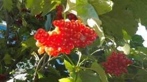 В субботу в Брянске днем сохранится летняя погода