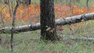 Лесники Брянской области выйдут на борьбу со свалками