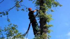 Мэра Брянска обязали обрезать деревья на улице Кольцова