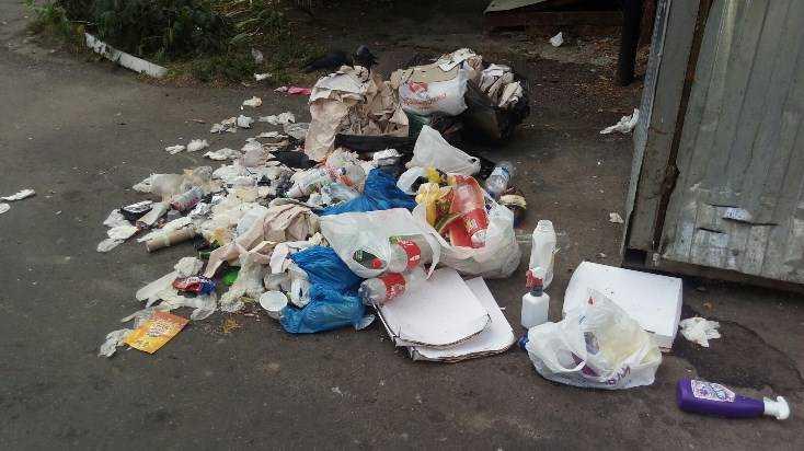 Жители Брянска превратили в свинарник участок у магазина на улице Крахмалёва