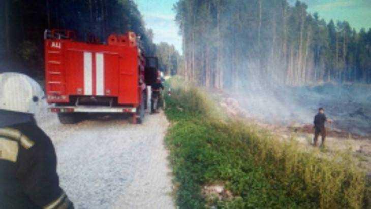 Под Брянском сгорел участок леса