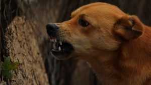Ученые – о бешеных собаках в Брянске: вирус на границе угрожает России