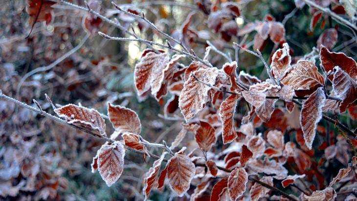 В октябре в Брянскую область придет аномальный холод