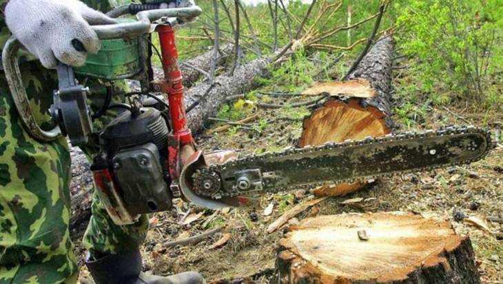 В брянских лесах стало вдвое меньше незаконных вырубок