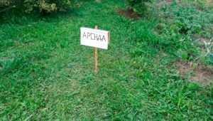 В Красной Горе чиновники незаконно пытались продать землю арендатору участка