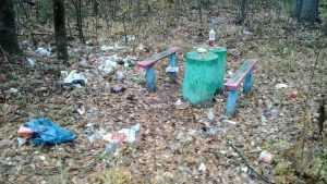 В брянских лесах уголки отдыха превратили в свинарники