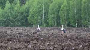 У брянских крестьян виртуозно отобрали сотни гектаров земли