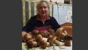 На Брянскую область наконец обрушилось грибное счастье